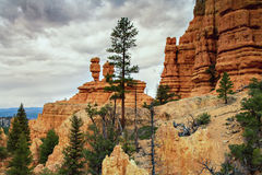 Hoodos of the Red Canyon Royalty Free Stock Photos