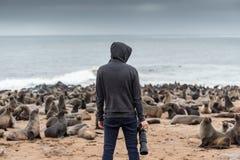 Hoody męski fotograf stoi nad dziesięć tysięcy futerkowymi fokami wewnątrz Obrazy Royalty Free