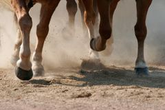 Hoof Dust. The hooves of running horses.  Shallow focus - focus is on the farther legs Royalty Free Stock Photos