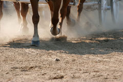 Hoof Dust. Horses galloping in front of a carriage/wagon, sunlight streaming through the dust.  Shallow focus (on the front hooves Stock Images