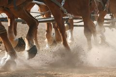 Hoof Dust. Horses pulling a wagon through dirt (shallow focus Stock Image