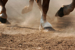 Hoof Dust. The hooves of horses running through dirt Stock Images