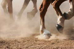 Hoof Dust. The hooves of horses running through dirt Royalty Free Stock Photos