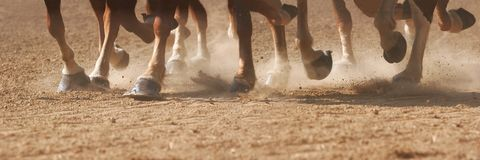 Hoof Dust. The hooves of horses running through dirt, stitched panorama Royalty Free Stock Photography