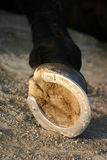 Hoof of horse. Hoof of a black horse laid down Stock Image