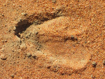 Hoof imprint. Imprint of the hoof of an African antelope in the sand Royalty Free Stock Photos
