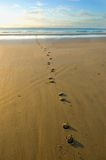 Hoof prints in the sand. Leading down to the water's edge very early in the morning Royalty Free Stock Photo