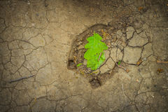 Hoof. Trail Green Earth Drought Sand Background Oak Leaf Stock Photography