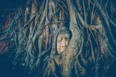 Hoofd Buddha stock afbeelding
