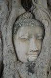 Hoofd Buddha Royalty-vrije Stock Foto