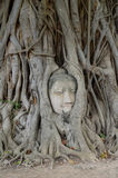 Hoofd Buddha Royalty-vrije Stock Afbeelding