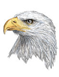 Hoofd de kleurenvector van Eagle Stock Afbeelding