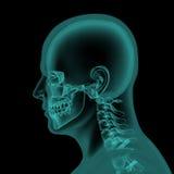 Hoofd en hals x-ray aftasten vector illustratie