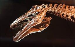 Hoofd en hals van grote voorhistorische dinosaurus met getande tanden stock foto
