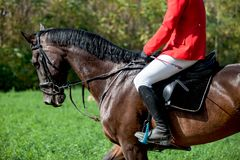 Hoofd geschotene close-up van een dressuurpaard tijdens de concurrentiegebeurtenis Kleur, ruiter royalty-vrije stock foto