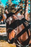 Hoofd geschotene close-up van een paard op de zomerweiland Close-up van een jong paard op natuurlijke achtergrond in openlucht royalty-vrije stock fotografie