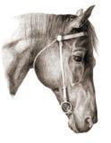 Hoofd-paard royalty-vrije illustratie