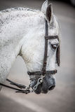 Hoofd paard Stock Foto's