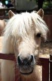 Hoofd poney grappig kapsel Stock Foto