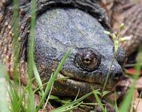 Hoofd schot van een brekende schildpad stock foto