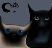 Hoofd Siamese en een zwarte kat op een grijze achtergrond Stock Fotografie