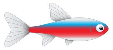 Hoofd tetradieaquariumvissen op witte achtergrond worden geïsoleerd Royalty-vrije Stock Afbeeldingen