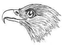 Hoofd van adelaar royalty-vrije illustratie