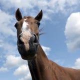 Hoofd van bruin paard tegen blauwe hemel met wolken Stock Fotografie