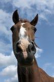 Hoofd van bruin paard tegen blauwe hemel met wolken Stock Afbeeldingen