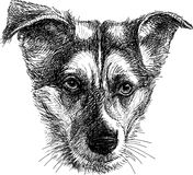 Hoofd van droevige hond Stock Foto's