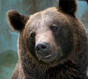 Hoofd van een beer Royalty-vrije Stock Afbeeldingen