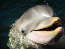 Hoofd van een dolfijn in de oceaan wordt geschoten die royalty-vrije stock foto