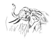 Hoofd van een olifant Royalty-vrije Stock Foto