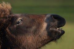 Hoofd van een paard Royalty-vrije Stock Foto's
