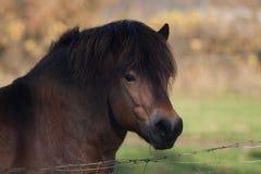 Hoofd van een paard Royalty-vrije Stock Fotografie