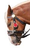 Hoofd van een paard Stock Foto
