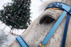 Hoofd van een paard tegen de achtergrond van verfraaide Kerstmis royalty-vrije stock afbeelding