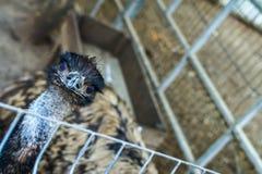 Hoofd van een struisvogel royalty-vrije stock afbeeldingen