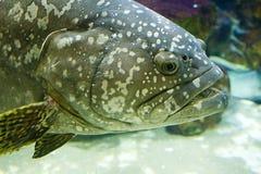 Hoofd van een vis stock afbeeldingen