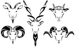 Hoofd van geit en bladillustratiereeks Royalty-vrije Stock Foto