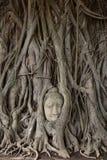 Hoofd van het standbeeld van Boedha Stock Afbeelding