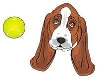 Hoofd van hond met een bal royalty-vrije illustratie