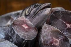 Hoofd van koningsvissen voor kerrie stock afbeeldingen