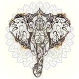 Hoofd van olifant Stock Foto's