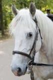 Hoofd van paard Royalty-vrije Stock Foto's