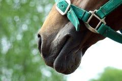 Hoofd van paard stock afbeeldingen