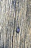 Hoofd van spijker in hout Stock Foto