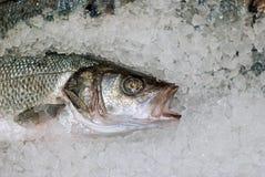Hoofd van verse vissen op ijs royalty-vrije stock afbeelding