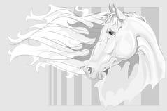 Hoofd van wit paard Royalty-vrije Stock Afbeeldingen