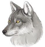 Hoofd van wolf Stock Foto